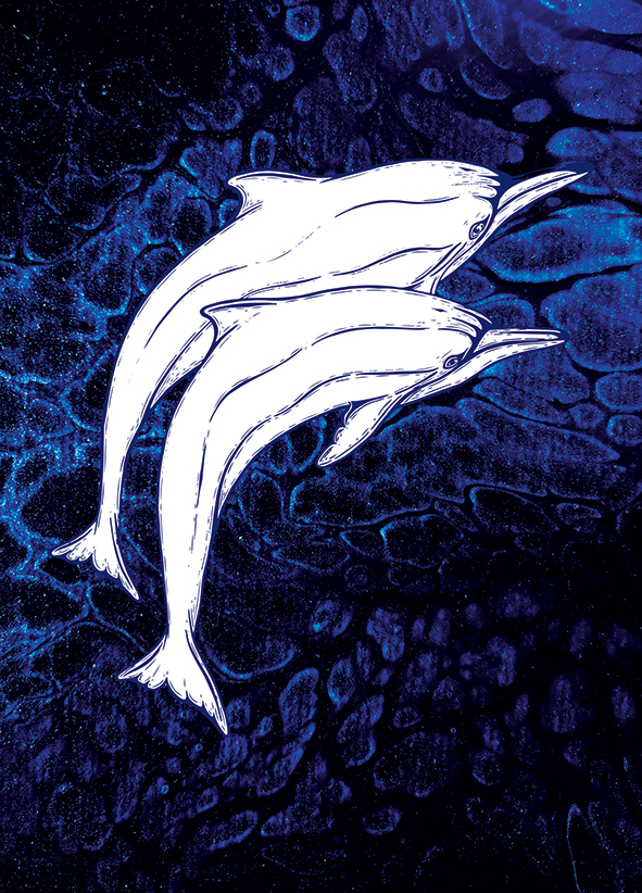 Dolphins Blue Ocean Watch