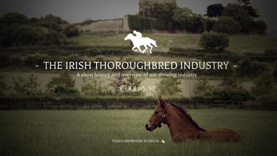 The Irish thoroughbred industry