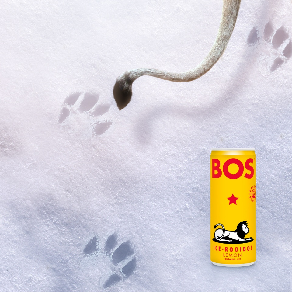 Bos / Lion